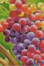 Gerdamoon B009 - Colorful Grape - Free