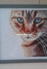 Lanarte 35174 cat close-up