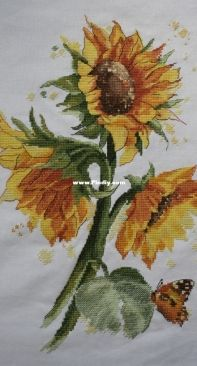 Panna C-7136 Bright Sunflowers