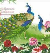 KCO 612224 - Peacocks with Peonies