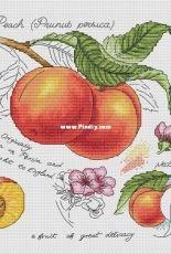Alla Erokhova - Botany Series - Peach