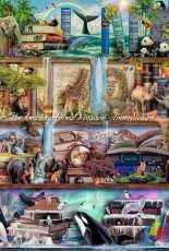 HAED HAEAIS 16499 The Amazing Animal Kingdom by Aimee Stewart (Large Format)