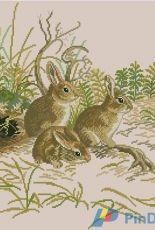Eva Rosenstand 12-972  Rabbits