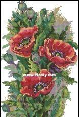 Merejka K-81 Vintage Poppies