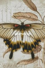 Chimera - Butterfly Vintage 3 by Jane Shasky