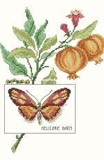 Le Papillon Heliconie Doris by V. Enginger from Oiseaux, Papillons et Petites Bêtes Page 33 XSD
