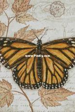 Chimera - Butterfly Vintage 12 by Jane Shasky