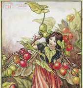 Flower Fairies - The Black Bryony Fairy