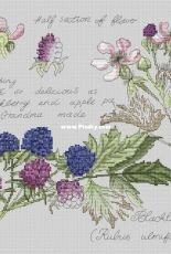 Alla Erokhova - Botany Series - Blackberry