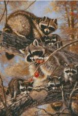 Chimera -Family of raccoons
