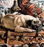 HAED HAETRL102 Pug on Suitcase