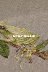 Froggy  by Ekaterina Volkova