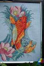 Merejka Koi Fish
