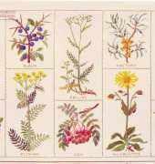 Haandarbejdets Fremme LN 30-4549 - Snap Herb by Gerda Bengtsson