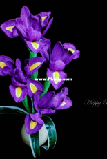 Happy Patty Crochet - Dutch Iris