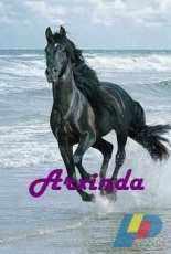 Arxinda - Black Horse
