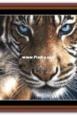 Witchykitt Designs - Tiger